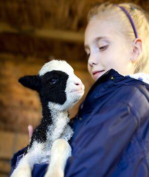 Calcium Carbonate in Animal Feed | Animal Nutrition