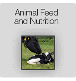 Animal Feed and Nutrition